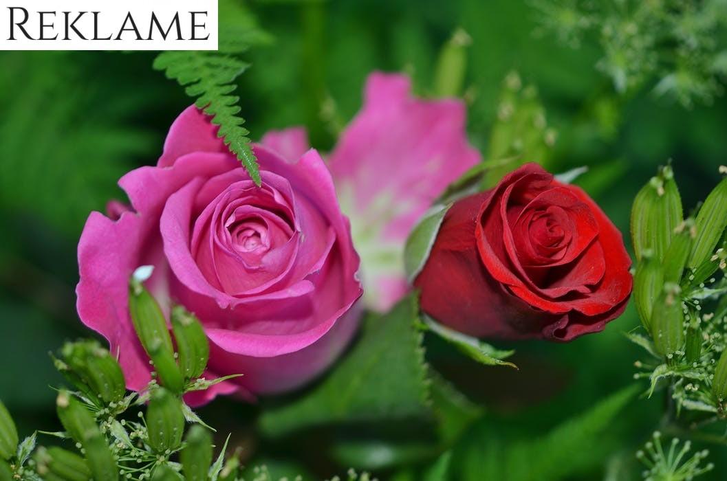 Send romantiske blomster i København